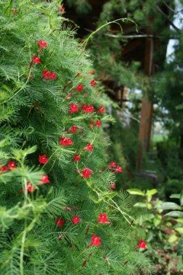 泰安樹屋門口的幸福小花~