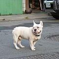 超可愛的狗狗