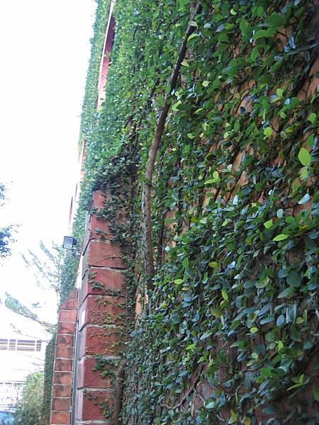 爬滿藤蔓的小屋