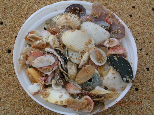 在山水撿的貝殼.jpg