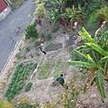 鄰居的菜園