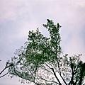 Negative0-06-4.jpg