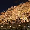 2011.春.清水寺夜櫻