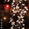 京都.祇園白川夜櫻