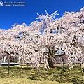 醍醐寺.櫻花.靈寶館