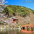 醍醐寺.伽藍.櫻花