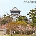 小倉城櫻花
