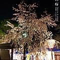京都.圓山公園.夜櫻