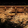 清水寺夜の特別拝観(夜櫻)