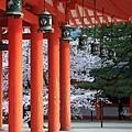 平安神宮.吉野櫻