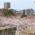 福岡 舞鶴公園
