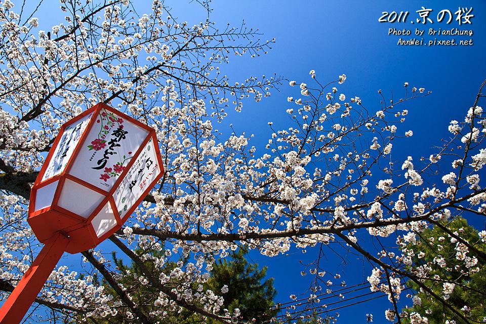 円山公園 吉野櫻