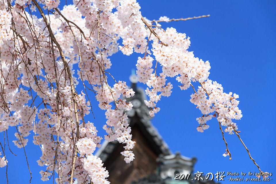 醍醐寺 三寶院