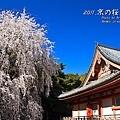 醍醐寺 伽藍 金堂
