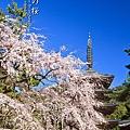 醍醐寺 伽藍 五重塔