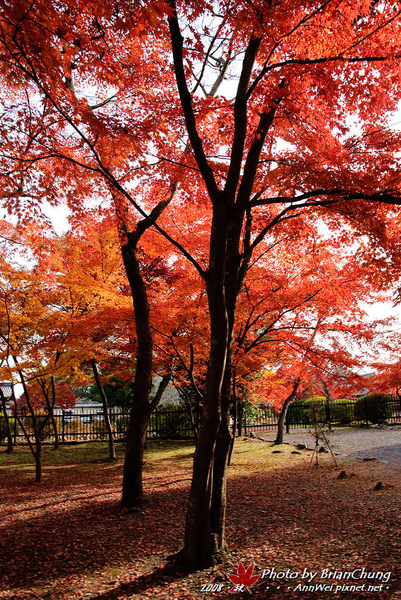 天龍寺外庭園
