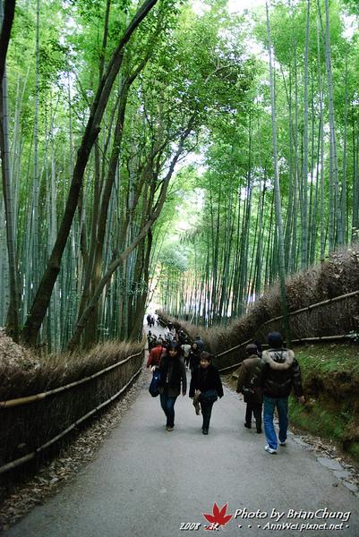 嵐山-竹林