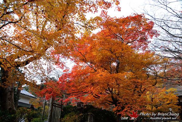 嵐山-常寂光寺