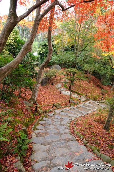 常寂光寺-庭園