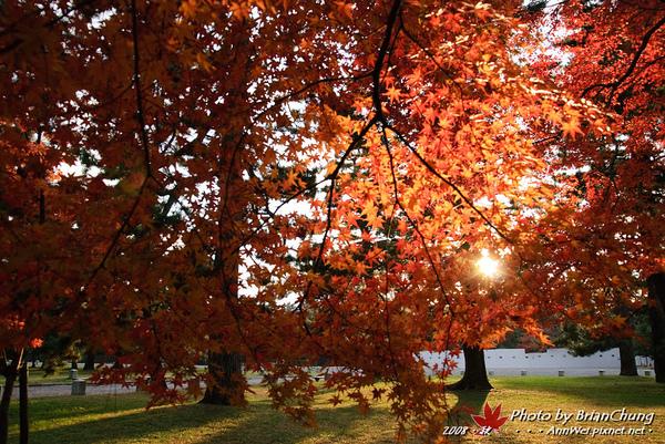 京都御苑-夕陽