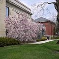 美術館旁開花的樹。