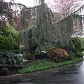 花圃~END~P1050589.JPG