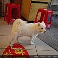 豆花店遇到的狗狗P1060827.JPG