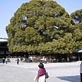 圓圓的蘑菇樹