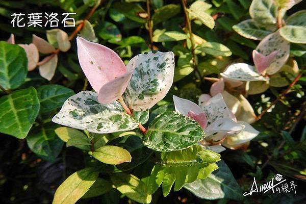 花葉洛石-(4).jpg