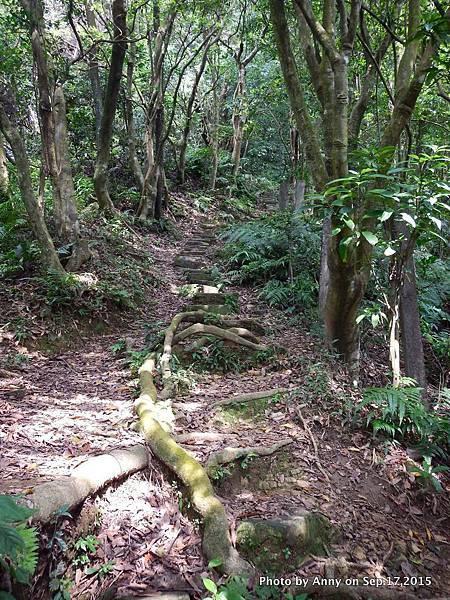 猴山岳步道11.jpg