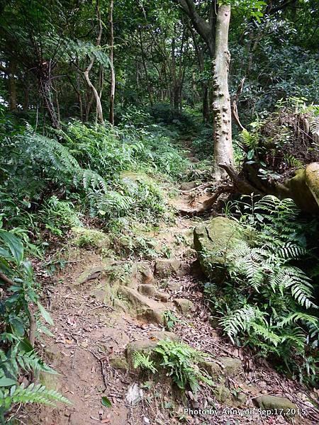 猴山岳步道10.jpg
