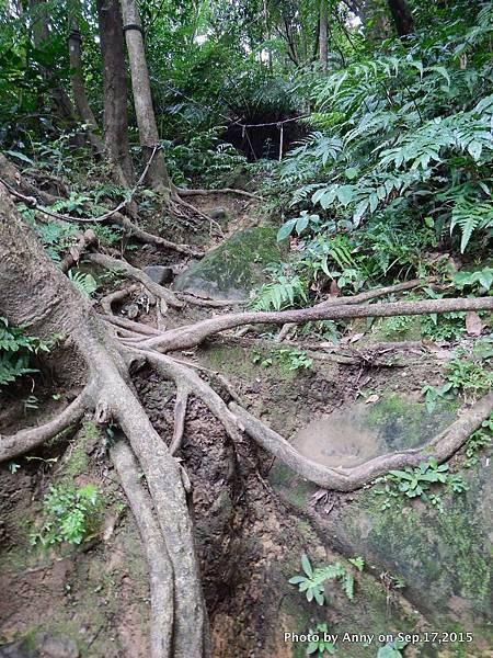 猴山岳步道12.jpg