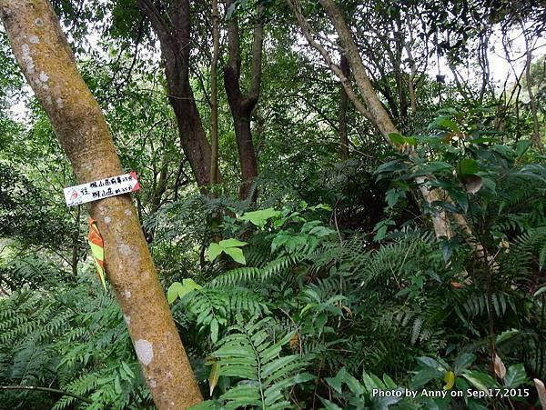 猴山岳步道9.jpg