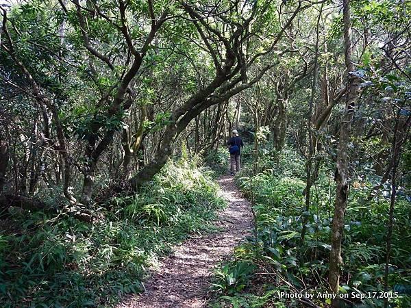 猴山岳步道25.jpg