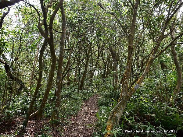 猴山岳步道30.jpg