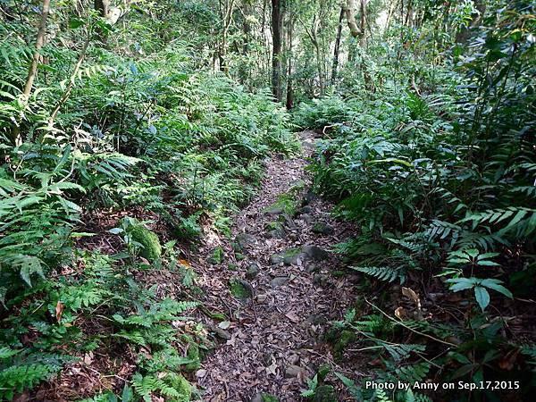 猴山岳步道37.jpg
