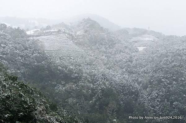 台灣下雪 坪林下雪3.jpg