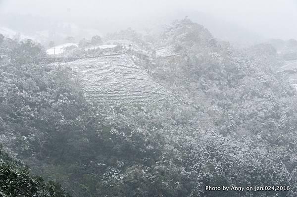 台灣下雪 坪林下雪1.jpg