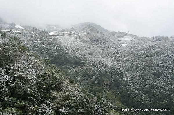 台灣下雪 坪林下雪5.jpg