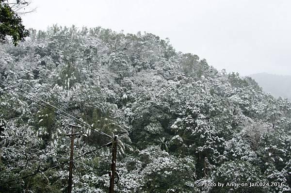 台灣下雪 坪林下雪4.jpg