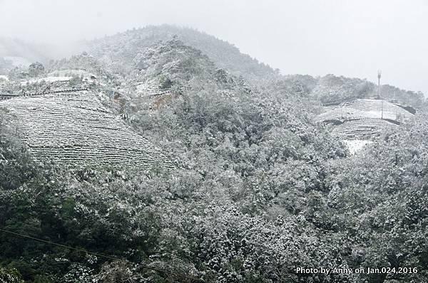 台灣下雪 坪林下雪6.jpg