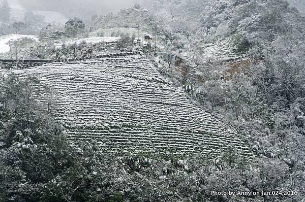 台灣下雪 坪林下雪7.jpg