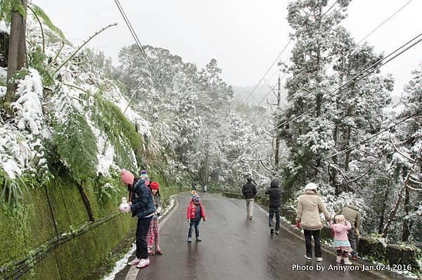 台灣下雪 坪林下雪13.jpg