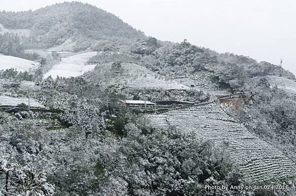 台灣下雪 坪林下雪11.jpg