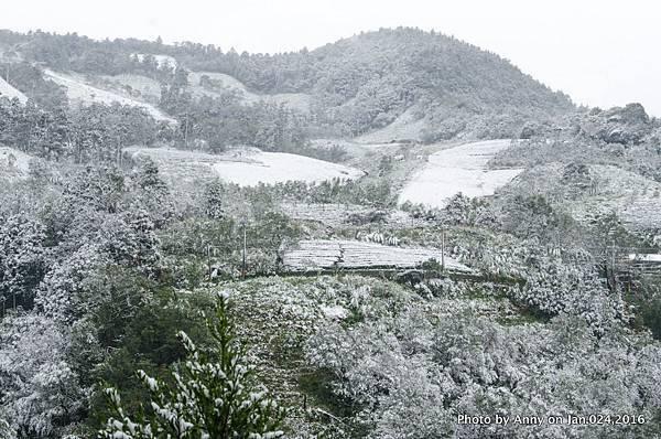 台灣下雪 坪林下雪12.jpg