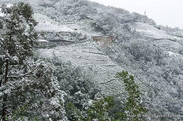台灣下雪 坪林下雪9.jpg