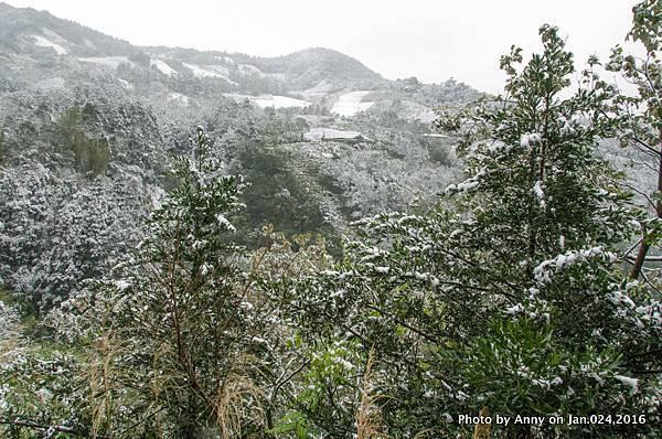 台灣下雪 坪林下雪14.jpg
