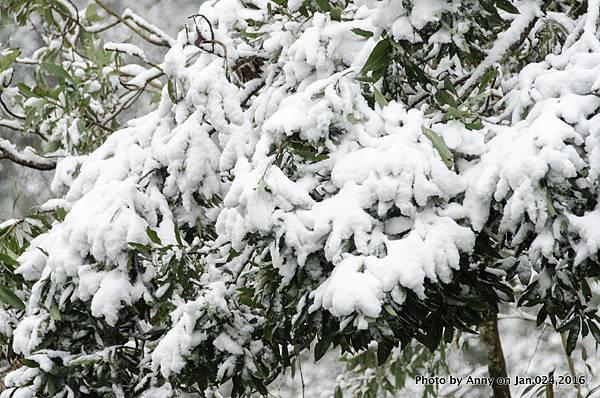 台灣下雪 坪林下雪15.jpg