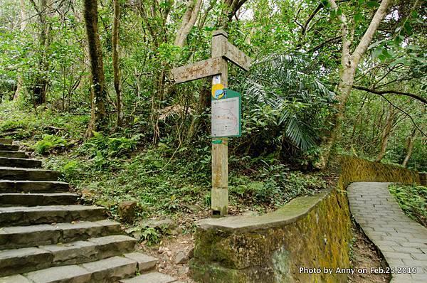 圓覺寺步道 鯉魚山步道6.jpg