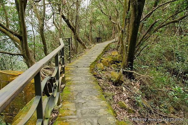 鯉魚山步道3.jpg